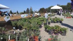 Plant Sale GT16