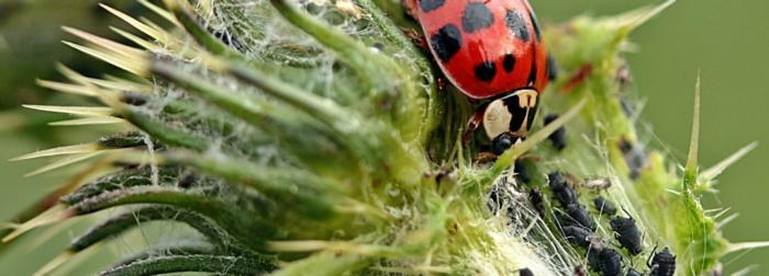 ladybug-banner