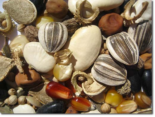 seed-pile