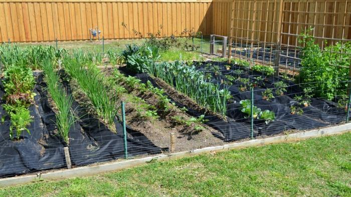 spring-vegetable-gardening-in-april-with-crazy-texas-weather